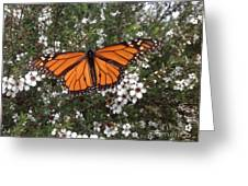 Monarch Butterfly On New Zealand Teatree Bush Greeting Card