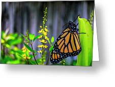 Monarch Butterfly Poised On Green Stem Among Yellow Flowers Greeting Card