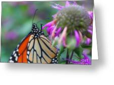 Monarch Butterfly Posing Greeting Card