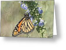Monarch Butterfly Textured Background Greeting Card