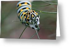 Monarch Caterpillar Clutches Dill In Pincers, Macro Greeting Card