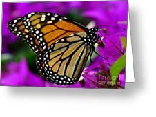 Monarch Dreams Greeting Card