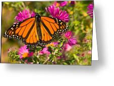 Monarch Feeding Greeting Card