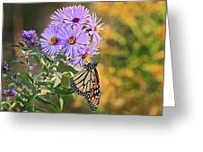 Monarch Feeding Greeting Card