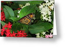 Monarch Framed Greeting Card