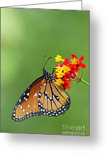 Queen Hanging Around Greeting Card