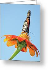 Monarch I Greeting Card