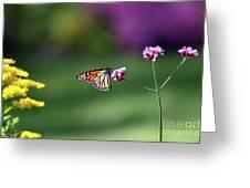 Monarch In Fall Garden 2011 Greeting Card