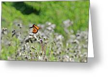 Monarch In Flight Greeting Card