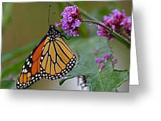 Monarch In The Rain Greeting Card