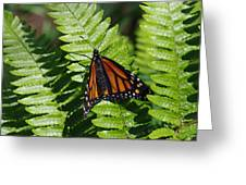 Monarch On A Fern Greeting Card