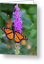 Monarch Of The Garden Greeting Card