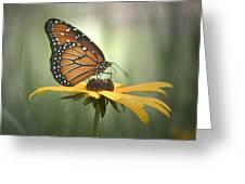 Monarch On A Black Eyed Susan Greeting Card