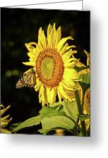 Monarch On A Sunflower Greeting Card