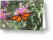 Monarch On Blanket Flower Greeting Card