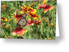 Monarch On Blanketflower Greeting Card