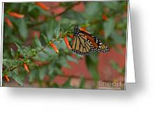 Monarch On Cigar Plant Greeting Card