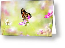 Monarch On Cosmos Greeting Card