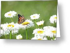 Monarch On Daisies Greeting Card