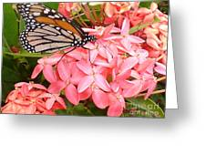Monarch On Huneysuckle Greeting Card