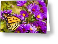 Monarch On Mt. Washington Greeting Card