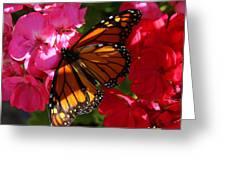 Monarch On Summer Geraniums Greeting Card