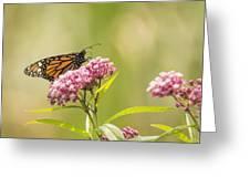 Monarch On Swamp Milkweed 2014-1 Greeting Card