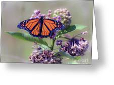 Monarch On The Milkweed Greeting Card