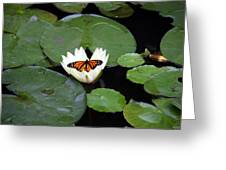 Monarch On Waterlily Greeting Card