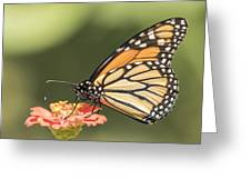 Monarch On Zinnia 4-2015 Greeting Card