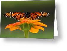 Monarch Orange Greeting Card
