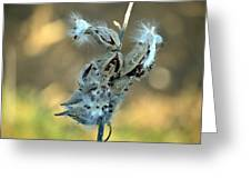 Monarch Seeds Greeting Card