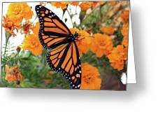 Monarch Series 1 Greeting Card