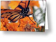 Monarch Series 2 Greeting Card
