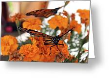 Monarch Series 3 Greeting Card