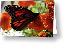Monarch Series 8 Greeting Card