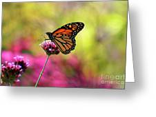 Monarch Song Greeting Card