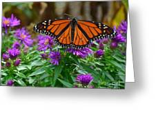 Monarch Spreading Its Wings Greeting Card