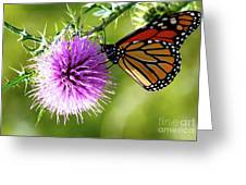Monarch Thistle Greeting Card