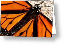 Monarch Triangles Greeting Card