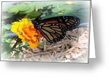 Monarch Greeting Card by Trina Prenzi