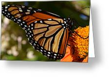 Monarch Up Close Greeting Card