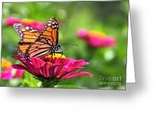 Monarch Visiting Zinnia Greeting Card