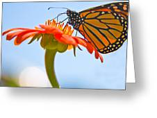 Monarch Working Greeting Card