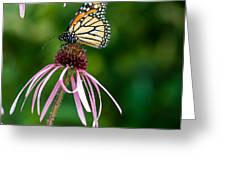 Monarched Coneflower Greeting Card