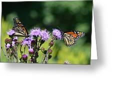Monarchs And Blazing Star Greeting Card
