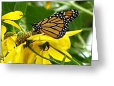 Monarchs Gold Greeting Card