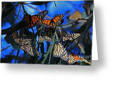 Monarchs In Paradise Greeting Card