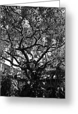 Monastery Tree Greeting Card