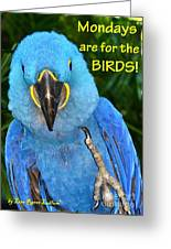 Monday For The Birds Greeting Card